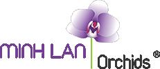MINH LAN Orchids